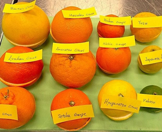 René Redzepi experiments with Japanese oranges, ahead of Noma's Tokyo pop-up